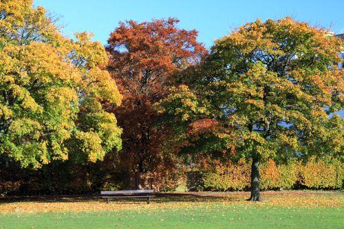 medis, medžiai, stendas, parkas, ruduo, kritimas, trys medžiai