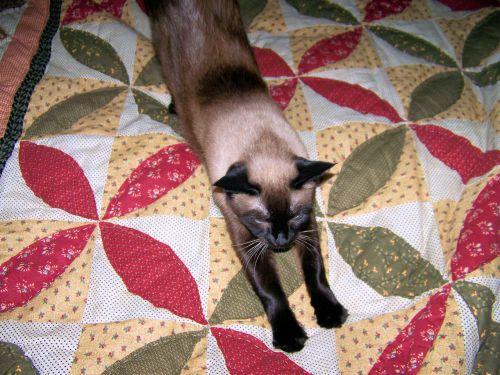 katė, ištempimas, lova, nap, ruožas