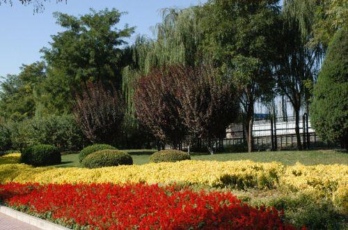 gėlės, medžiai, flora, flora