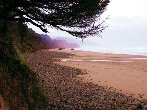patranka, papludimys, oregonas, kranto, pakrantė, per, medžiai, patrankos paplūdimys oregono pakrantė