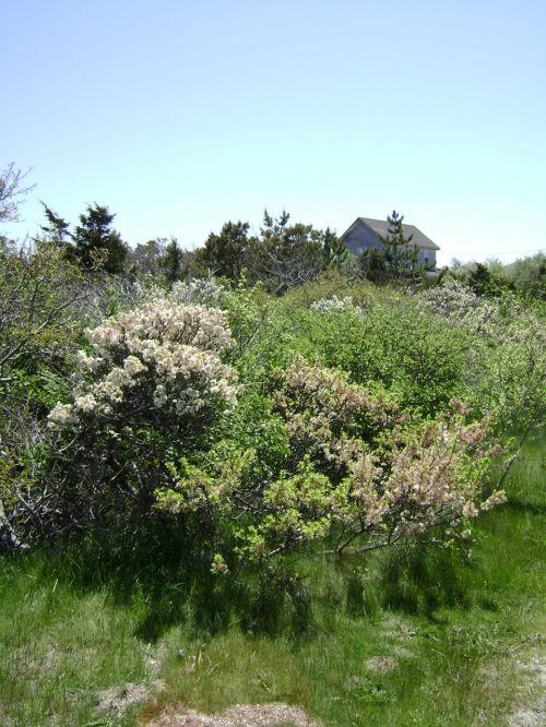 jūra, pajūryje, vasara, augmenija, pelkės, augalai, naujas, Anglija, Massachusetts, gamta, neišvystyta, apsaugotas, žemė, flora, vaizdingas, united, valstijos, pajūrio flora