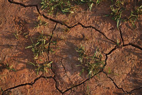 dirvožemis, žemė, sausas, krekingo, sausra, žolė, sausra