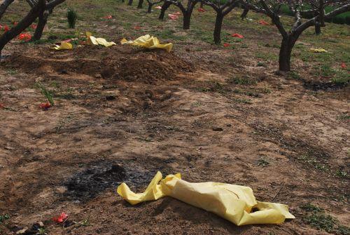 laidojimas, žemė, kapinės, įsibrovimas, kapai, kapinės