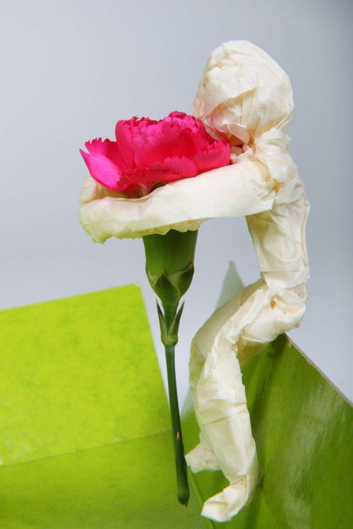 gražus, priežiūra, mielas, gėlė, gėlės, žalias, ranka, laimingas, ūkis, meilė, vyras, žmonės, asmuo, graži, romantika, romantiškas, valentine, asmuo, sėdi gėlėmis