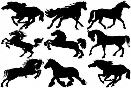 juoda, siluetai, izoliuotas, balta, fonas, nurodyta, veislė, asilas, kontūras, tamsi, jodinėjimas, jodinėjimas & nbsp, sportas, kumeliukas, hobis, arklys, arklio lenktynės, žirgų nardymas, iliustracija, linija, Mare, naminis gyvūnėlis, ponis, Jodinėjimas, siluetas, eržilas, grynas, trotteris, 9 arkliai