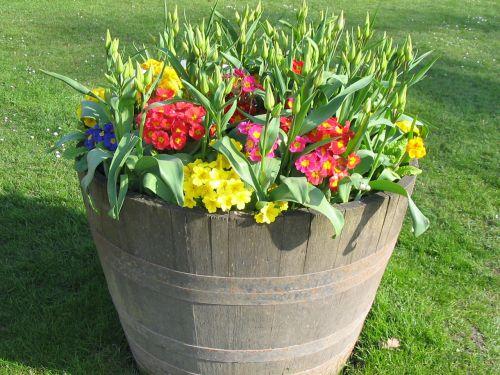 puodą, gėlės, žydėti, spalvos, įvairios, gėlė, puodą su gėlėmis