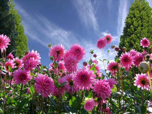 graži diena,gera nuotaika,džiaugsmas,dervos,gėlės,langas,vasara,vasaros sezonas,vasaros pabaigoje,vasaros gėlės,dangus,mėlynas,raudonos gėlės,sodas,parkas,perspektyva,Pietų parkas,Diuseldorfas,spalvinga,spalva,sodininkystė,estetika,kūrimas,Vokietija