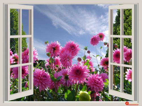 graži diena,gera nuotaika,džiaugsmas,dervos,gėlės,langas,vasara,vasaros sezonas,vasaros pabaigoje,vasaros gėlės,dangus,mėlynas,raudonos gėlės,gražus rytas,sodas,raudonieji dahliai,perspektyva,Pietų parkas,Diuseldorfas,langų rėmai,spalvinga,sodininkystė,foto montavimas,Vokietija