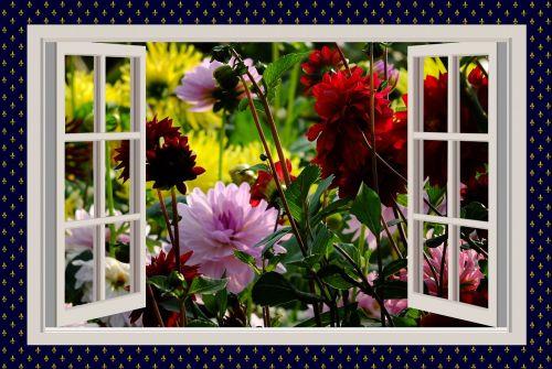 graži diena,gera nuotaika,džiaugsmas,dervos,gėlės,langas,vasara,vasaros sezonas,vasaros pabaigoje,vasaros gėlės,spalvingos gėlės,raudonos gėlės,gražus rytas,sodas,raudonieji dahliai,perspektyva,langų rėmai,baltas langas,balto lango rėmas,dizainas,atviras,spalva,spalvinga,farbenpracht,sodininkystė,naudos iš,kūrimas,foto montavimas