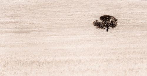 abstraktus,desolate,vienas,siluetas,aplinka,paliktas,gamta
