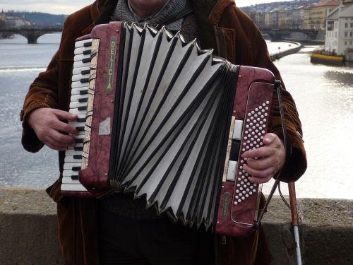akordeonas,harmonija,žaisti,žaisti,muzikantas,muzika,gatvė,instrumentas,vyras,muzikantai,garsai