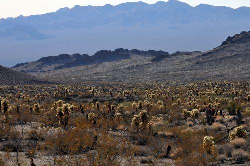 dykuma, kraštovaizdis, dykuma & nbsp, scape, yucca, yucas, krūmas, krūmai, augalas, augalai, kalnai, Jekų akr
