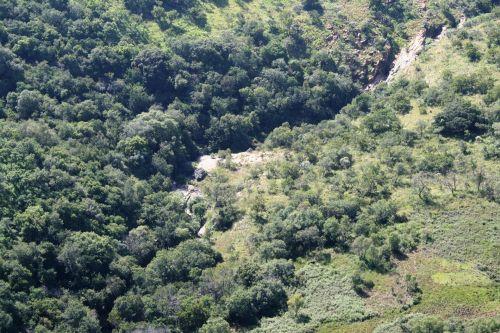 Hillside, nuolydis, žalias, augmenija, medžiai, gamta, kraštovaizdis, augmenija ant šlaito