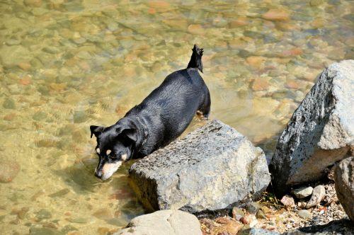 šuo, gyvūnas, naminis gyvūnėlis, vaikščioti, žaisti, parkas, vanduo, aušinimas, aušinimas