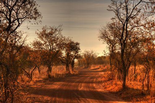 Afrikos kraštovaizdis,laukinis gyvenimas,žvyro kelias,safari