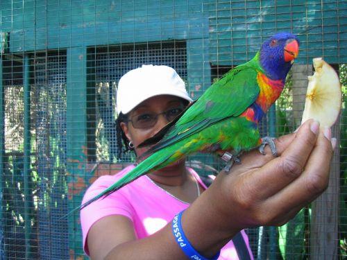 afroamerikietis, maitinimas, paukštis