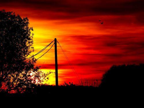 afterglow,saulėlydis,medis