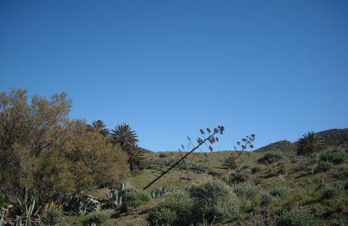 agavė,gėlių agavė,isleta del moro,Viduržemio jūros,Ispanija,sausas