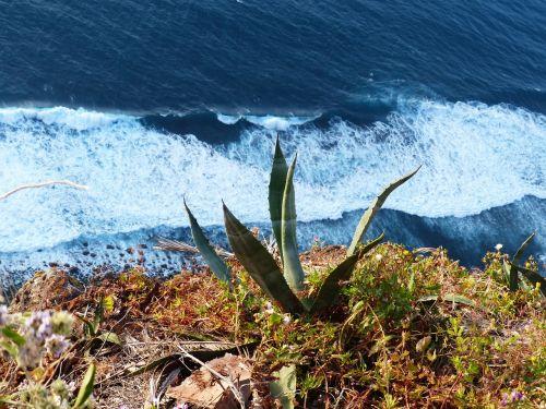 agavė,uolos,jūra,banga,naršyti,išsipūsti