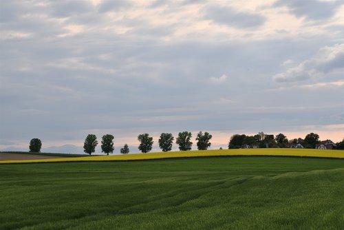 žemės ūkio, laukas, Žemdirbystė, auginimas, žemės, pobūdį, kalvotas, augalininkystė, žemės ūkio nuotrauka, vaizdingas, ūkininkas