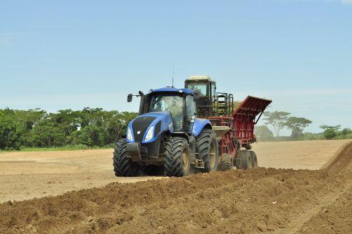 žemės ūkis,traktorius,ūkis,San Paulas cukranendrės,Royalty Free