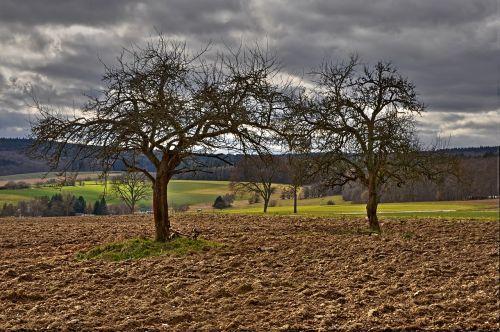 Žemdirbystė,laukas,ariamasis,gamta,laukai,medžiai,dangus,kraštovaizdis,dengtas dangus