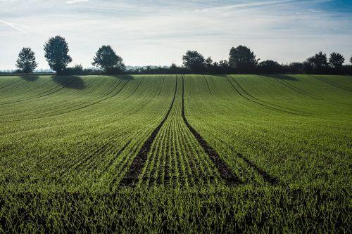 Žemdirbystė,getreideanbau,grūdai,laukas,kukurūzų laukas,auginimas,maistas,rugių laukas,žalias,kvieciai,augimas,augalas,žemės ūkio ekonomika,jaunas