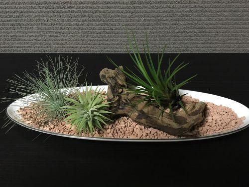 oro augalai,lapų augalas,kambarys,interjeras,madingas kambarys,komfortas