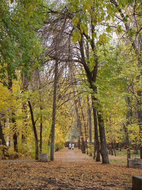 alėja,medžiai,miestas,parkas,ruduo,trasa,listopad,lapai,aukso ruduo
