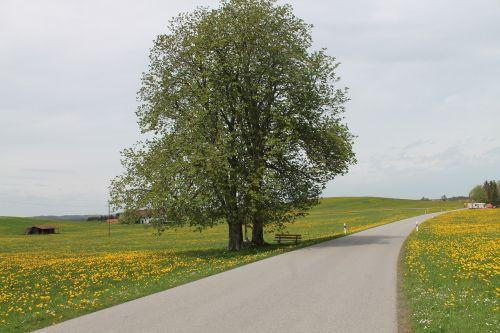 Allgäu,kraštovaizdis,kelias,kalnų peizažas,Allgäu Alpės,panorama