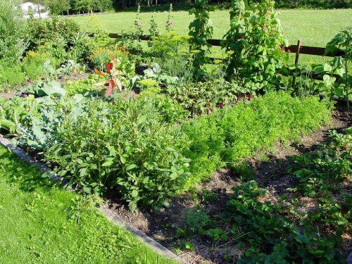 paskirstymas,sodas,beete,augalas,į fermą