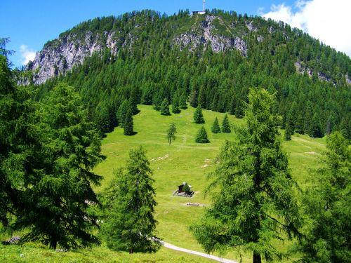 Alpių,idilija,ganykla