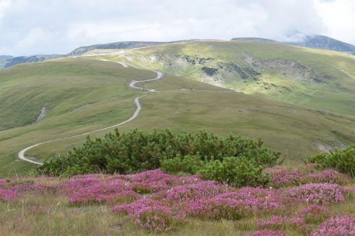 Alpių kelias,kalnų kelias,kalno viršūnė,kalnų kraštas,Alpių,aplinka,turizmas,kelias,kelias,kraštovaizdis,kelionė,vaizdingas,peizažas,vasara,kalnas,kalnas