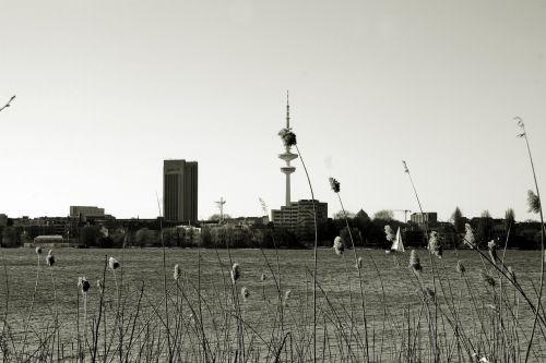 Alster, hamburgas, Hanzos miestas Hamburgas, hamburgensien, pasivaiksciojimas parke, tele michel, be honoraro mokesčio