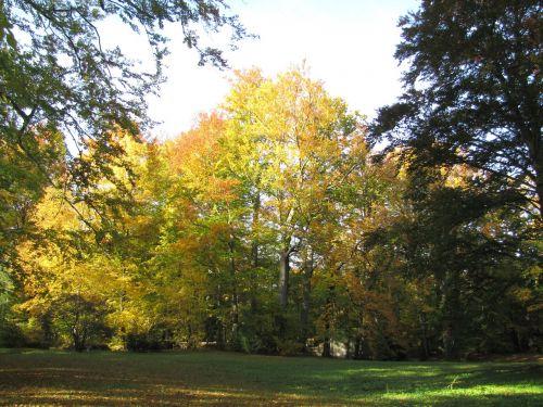 altzella abatijos parkas,ruduo,kraštovaizdis,spalvinga,gamta,medis,parkas