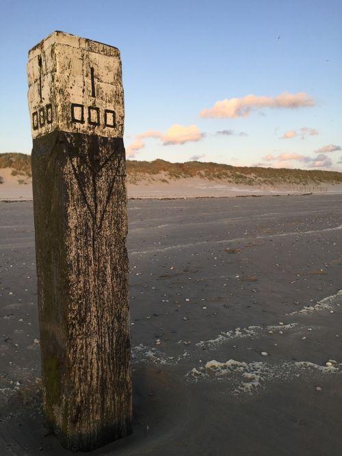Ameland,papludimys,šuo,šventė,ilgesys,holland,poilsis,debesys,smėlis,vatai,begalinis,jūra,Šiaurės jūra,Nyderlandai