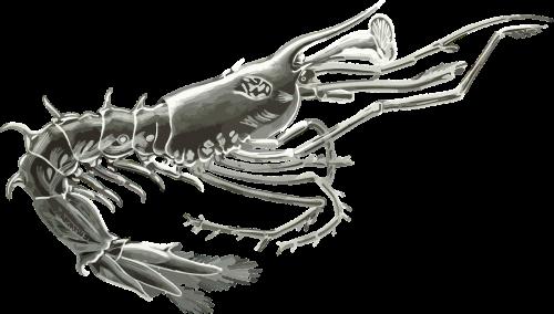 gyvūnas,meno formos gamtoje,vėžiagyviai,kunstformen der natur,lava,vandenynas,jūra,nemokama vektorinė grafika