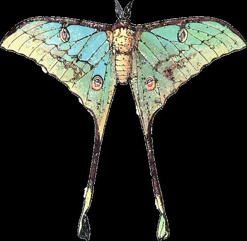 gyvūnas,drugelis,vabzdys,gamta,nemokama vektorinė grafika