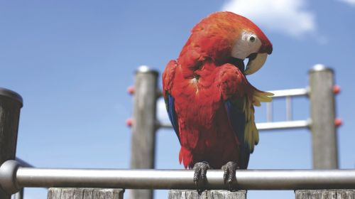 gyvūnas,paukštis,spalvinga,spalvinga,papūga,sustingęs