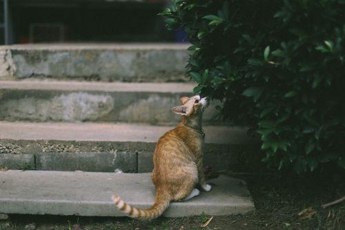 gyvūnas,gyvūnų fotografija,blur,katė,betonas,mielas,naminis gyvūnas,naminis katinas,kačių,žemė,kačiukas,lapai,naminis gyvūnėlis,augalas,laiptinė,laiptai,laiptai,tabby