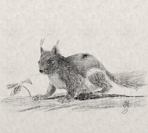 gyvūnas,voverė,skaitmeninis,pieštukas,kūrybingas,skaitmeninė tapyba,skaitmeninis menas