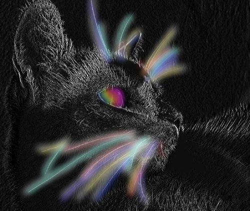 gyvūnas,katė,mieze