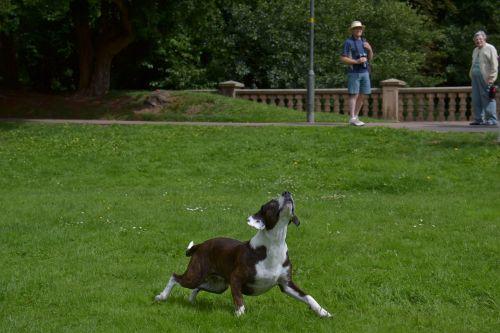 gyvūnas, šuo, veiksmas, kompanionas, Draugystė, laimingas, naminis gyvūnėlis
