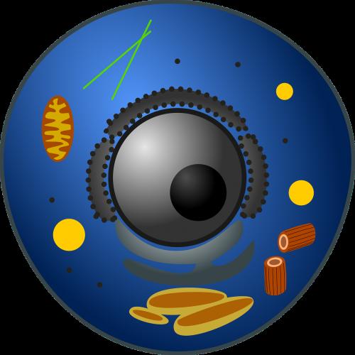 gyvūnų ląstelė,biologija,eukariotas