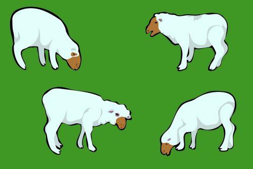 gyvūnai,ūkis,ūkio gyvūnai,vidaus,žemės ūkio,avys,ėriukai,žinduoliai,ganymas,pieva,laukas,ūkininkavimas,gamta,ganykla