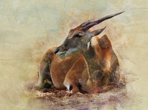 antilopė,gyvūnas,ovis,afrika,dykuma,šiluma,zoologijos sodas