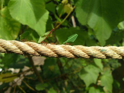 skruzdėlės,darbas,darbo,vežti,vabzdys,gamta