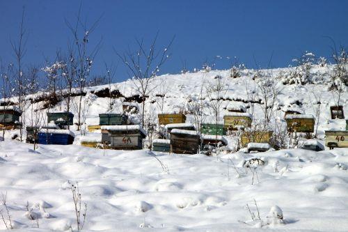 bityna,bitininkystė,bičių,aviliai,šaltas,sniegas,žiema,avilys,bitininkystė,korio rupiniai,bitininkas