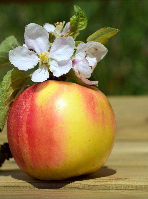 obuolys,obuolių žiedas,pavasaris,žiedas,žydėti,vaisiai,valgyti,maistas,sveikas,vitaminai,valgyti obuolį,pertrauka,vaisių pertrauka,obuolių pertrauka,skonis,pikantiškas,vaisių,saldus,sultingas,obuolių ir gėlių