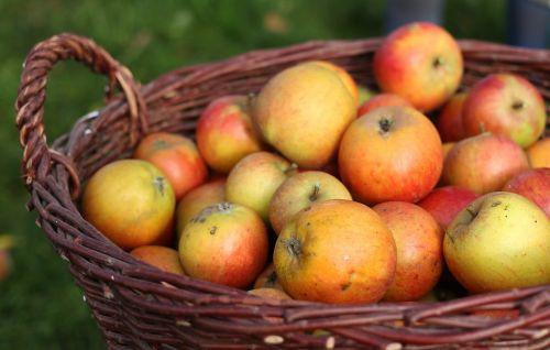 obuolys, Apfelernte, krepšelis, vaisių krepšys, vaisiai, vitaminai, raudona, prinokę, frisch, maistas, sodas, skanus, vasara, sveikas, blizgantis, vaisiai